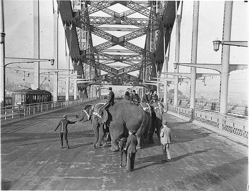 elephants walk over harbour bridge 1932